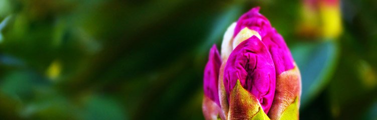 Blumen Hintergrundbild